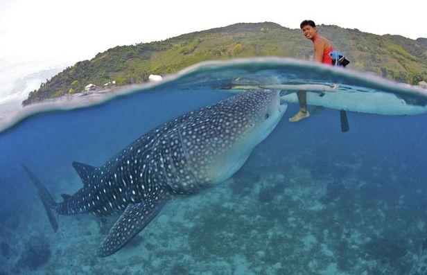 сколько лодок акула осталось