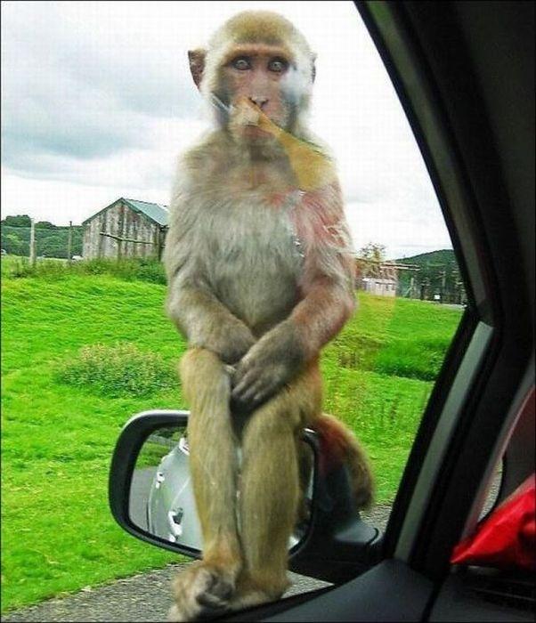Крутая подборка смешных фото животных