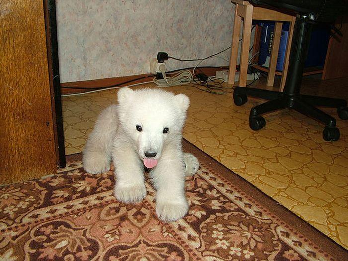 Медведи в домашних условиях 425