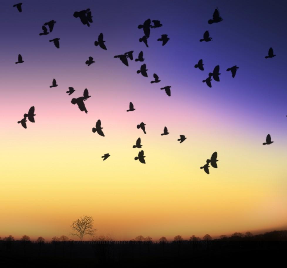 картинки с летящими птицами красивые верит что