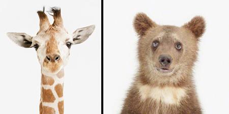 Портреты малышей животных