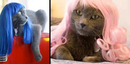 Прикольные кошачьи парики