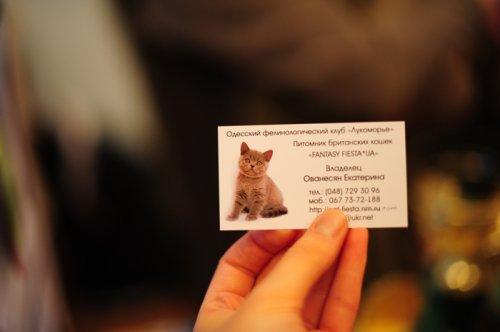 Выставка породистых кошек «Cat show Moldova 2011»