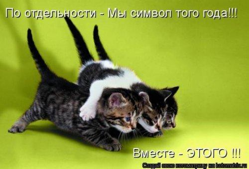 Лучшие котоматрицы недели, 25 фото