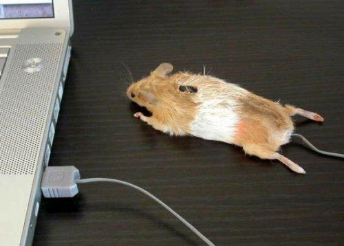 Креативные компьютерные мышки