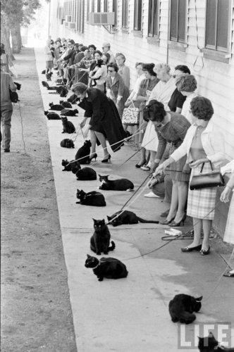 Кастинг черных котов в Голливуде