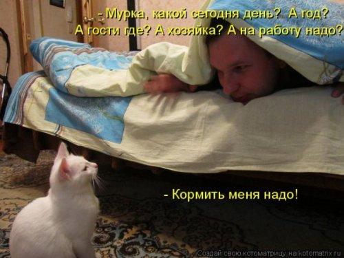 Лучшие котоматрицы недели (25 фото)