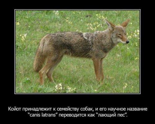 Интересные факты из жизни животных. Часть 2. 56884