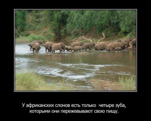 Интересные факты из жизни животных. Часть 2. 59349