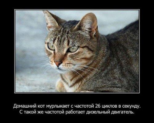 Интересные факты из жизни животных. Часть 2. 17711
