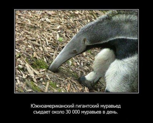 Интересные факты из жизни животных. Часть 2. 20316