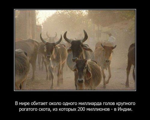 Интересные факты из жизни животных. Часть 2. 30033