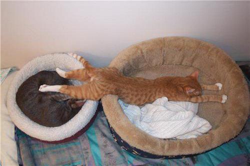 Кошки, спящие в странных позах