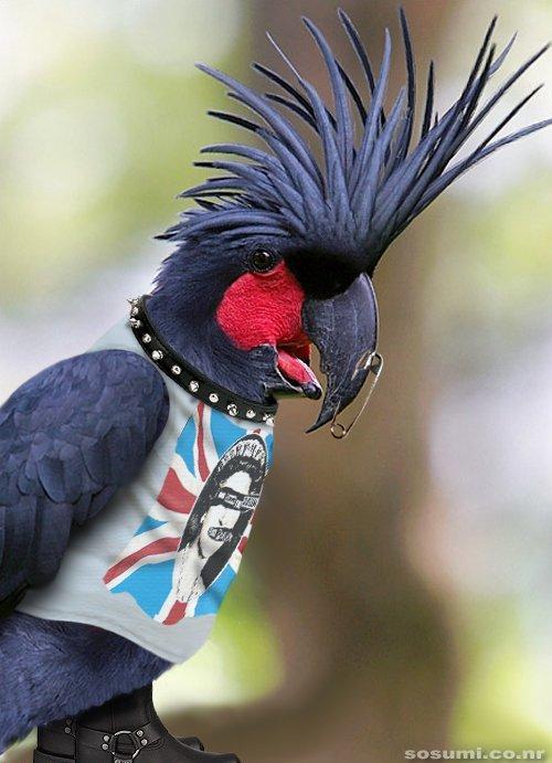 прикольные фото птиц