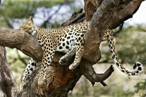 Спящие животные (38 фото)