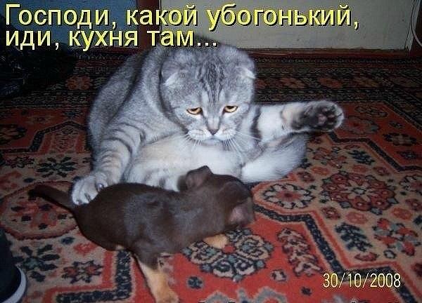 http://www.bugaga.ru/uploads/posts/2012-02/1328988842_24.jpg