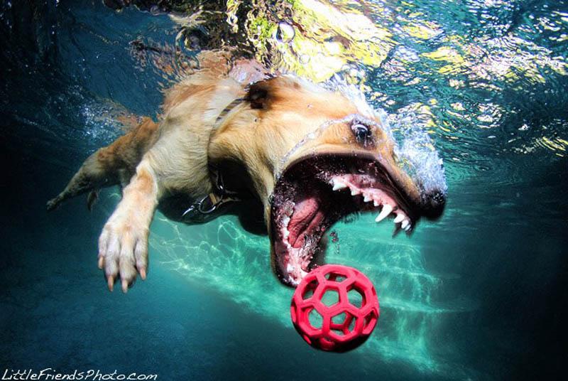 Животное не связанное с водой в своем развитии это