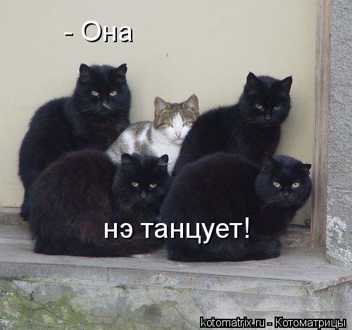 Смешная котоматрица (41 фото)