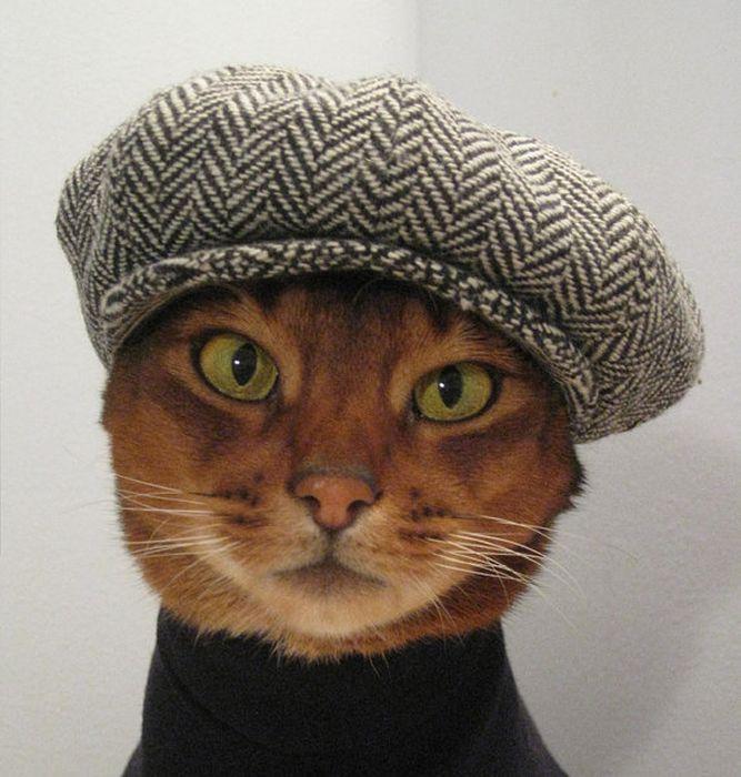горячие образы рисунок на голове кошки фото ближайших