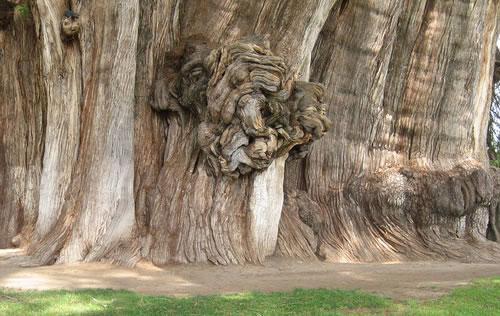 Топ-10: необычные деревья