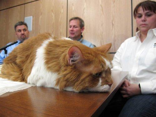 Операция для кота обошлась в 20 тысяч долларов