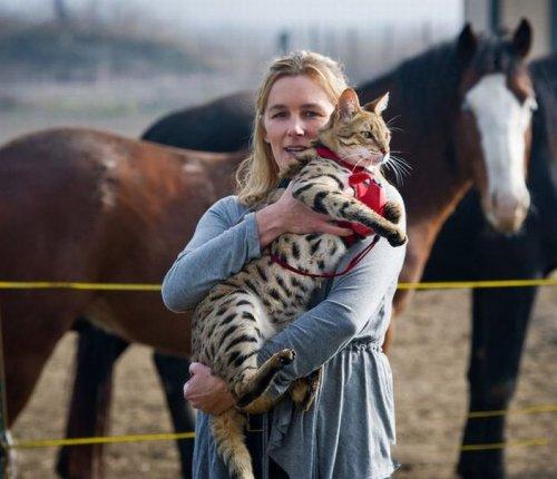 Trouble - самый длинный в мире кот