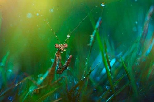 Сюрреалистичные макро-фотографии насекомых