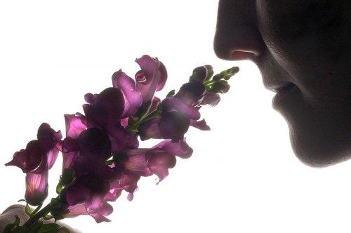 Интересные факты о полезных запахах