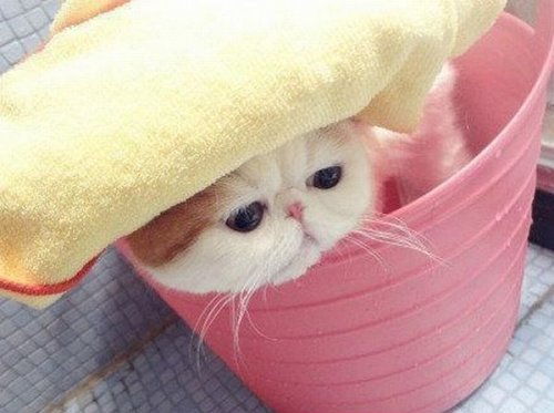 Милейший котенок