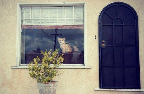 Фото домашних животных от Рэйчел Беллински