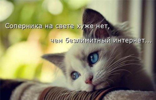 Смешные фото животных и котоматрицы