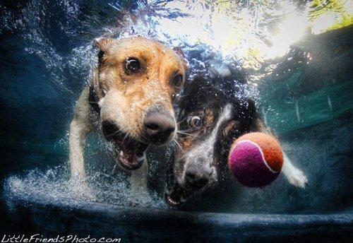 Собаки ловят мячик под водой