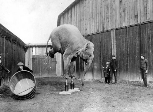 Ретро-фотографии слонов