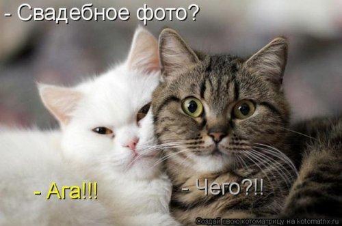 Лучшие котоматрицы недели, 35 шт.
