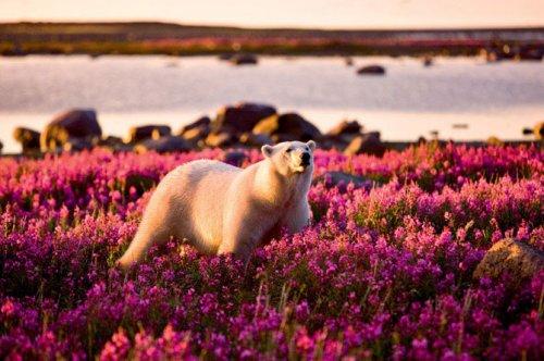 Обитатели Арктики и Антарктики