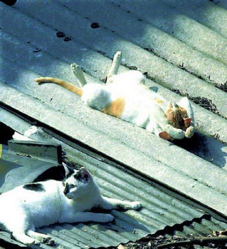 В каких позах спят кошки