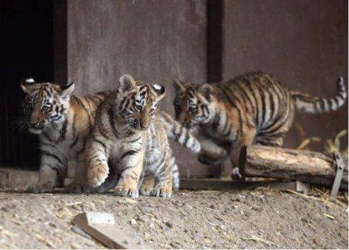 Животные в фотографиях, 24 фото