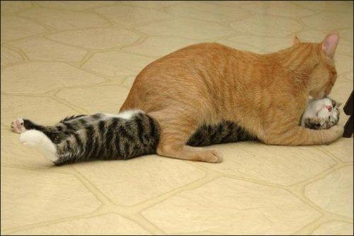Коты за неприличными занятиями