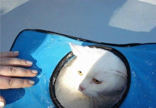 Две девушки спасли кота, выброшенного в реку