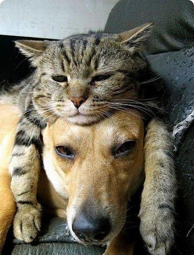 Лучшие друзья навеки