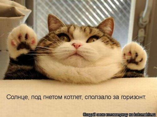 Лучшие котоматрицы недели, 24 шт