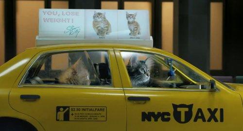 Позитивные котята