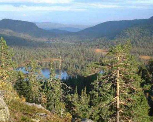 Топ-10: Странные леса