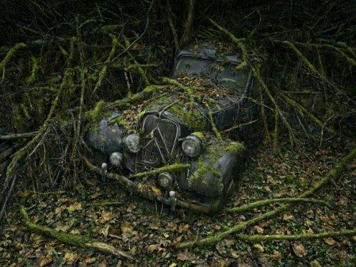 """Серия """"Paradise Parking"""" Питера Липпмана"""