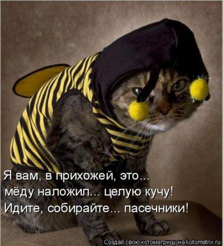 Котоматрицы они же котомотиваторы