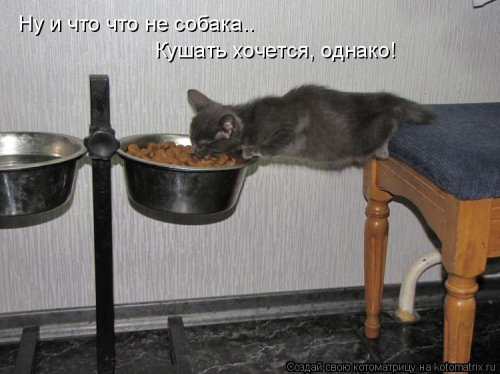 http://www.bugaga.ru/uploads/posts/2012-03/1330692110_kotomatrix_31.jpg
