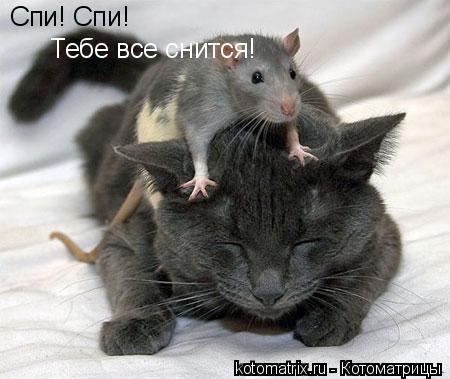 http://www.bugaga.ru/uploads/posts/2012-03/1330960156_kotomatrix_01.jpg