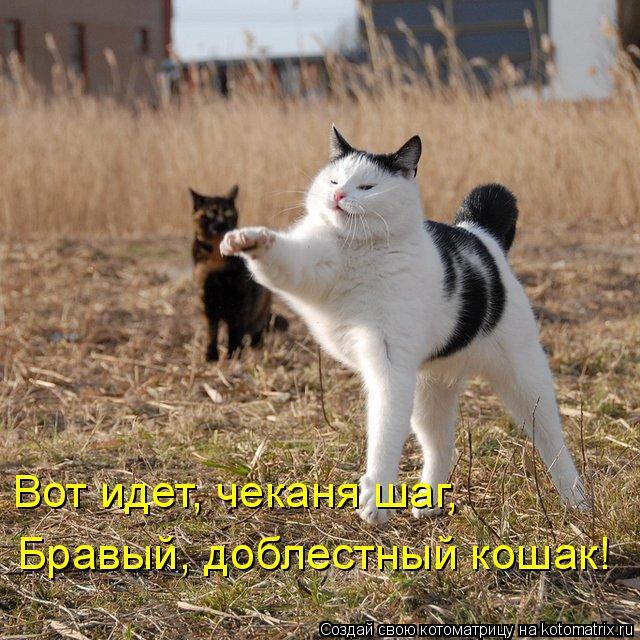 Котоматрица 1331120797_kotomatrix-20