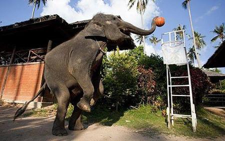 Топ-10: странные виды спорта с животными