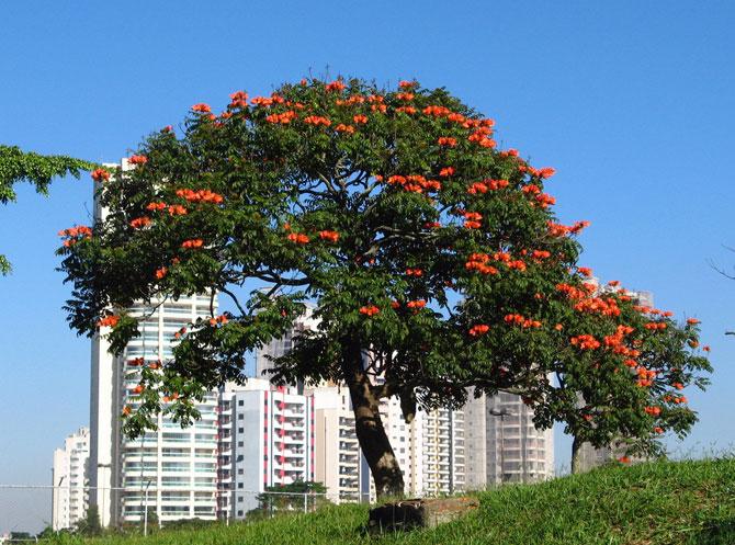 цветок дерево фото